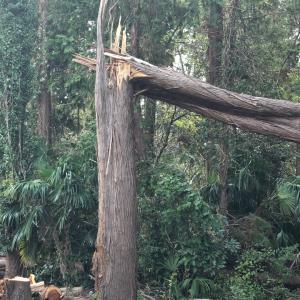 台風被害の傷跡