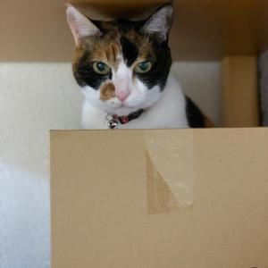 落ち着く箱