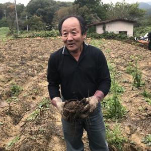 群馬県高山村 外国人留学生のこんにゃく芋収穫体験