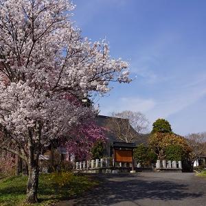 群馬県高山村にも桜の季節がやってきました!!