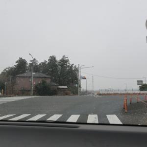 クリスマスローズの生産・直売「加藤農園」へ〜東松山市