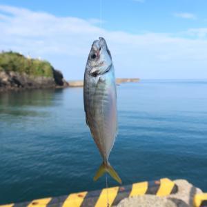 能登の海の幸を堪能!釣り旅後のお楽しみ♪