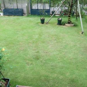 芝刈りは端っこが大事。ガーデン活動♪