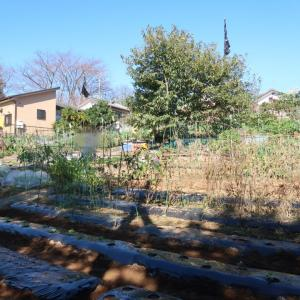菜園活動日和♪〜畝作り、定植、種蒔き