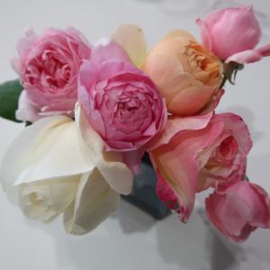 秋バラの美しさと香りにうっとり(´ー`)