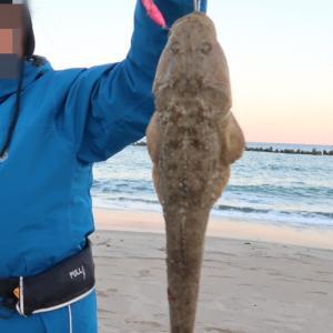 初釣り高級魚マゴチは絶品!驚きの美味しさ!