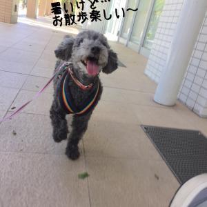 3日ぶりの散歩