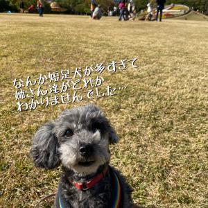 稲毛お散歩トレーニング