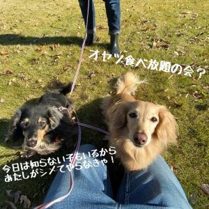 筑波お散歩トレーニング