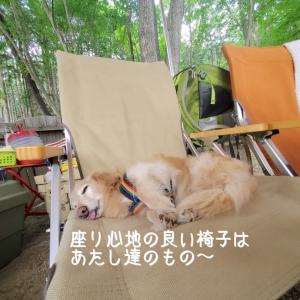 犬と一緒にキャンプあるある