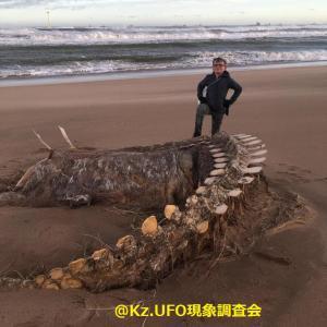 スコットランド北東部の海岸に打ち上げられた漂着物 UMA?