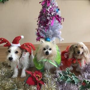 プレゼントがいっぱいの犬との日々