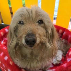 14歳おめでとうプク★大切な愛犬の命を守り、健康寿命を延ばすセミナー開催決定!!
