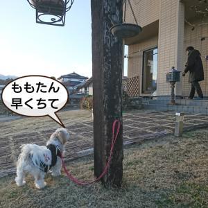 ももたんとおちゃんぽ~&富士山