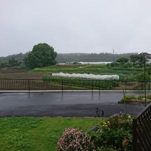 雨の日ばっかりで、まったりんこでつ