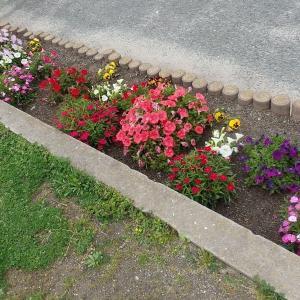小さな花壇その12