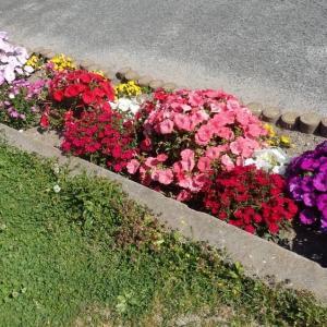小さな花壇その後