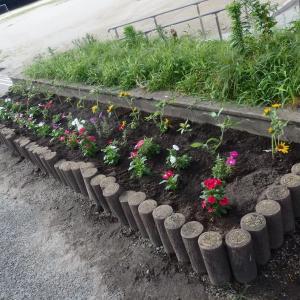 小さな花壇その9 花ボランティア