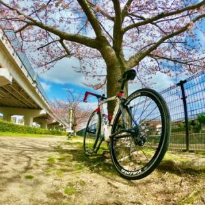 しまなみ海道の途中ですが 事情により ご近所で 桜調査しましたを掲載。