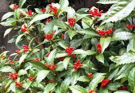 赤い実の庭の木々