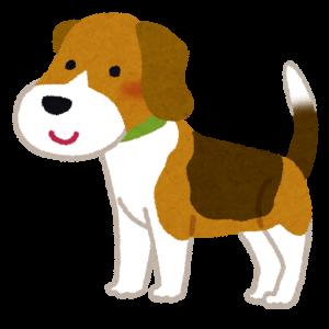 【動画】水遊びが好きな犬とそうでない犬との比較がこちら