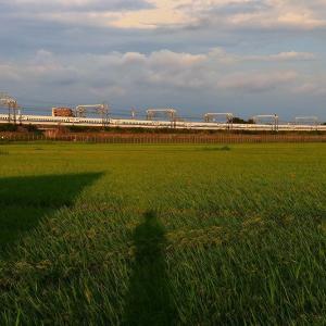 夕方の新幹線を撮ってみた