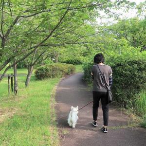 ねねさんとお散歩 ♪