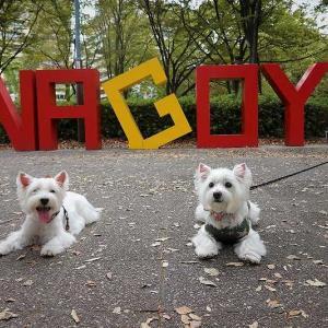 名古屋城を白犬さんとお散歩♪