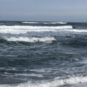 海サクラチャレンジ!
