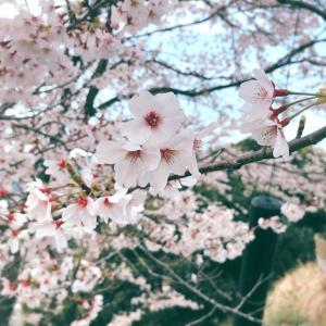 桜と美容院~♪
