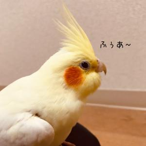 鳥さんのあくび好き