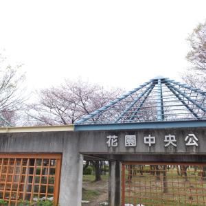 花園中央公園【開花速報】2020
