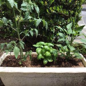 ◆家庭菜園、始めました♡