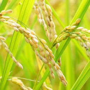 ♡お米は神様の食べ物