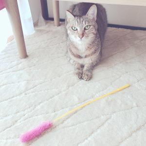 クリスタルと猫様と♡