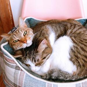 今後も猫共々♡