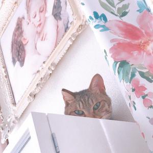 猫あるある♡