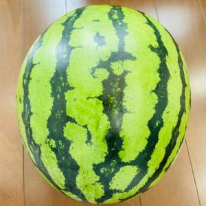 「取材」+スイカ&トマト&レタスの栄養「いただきもの」