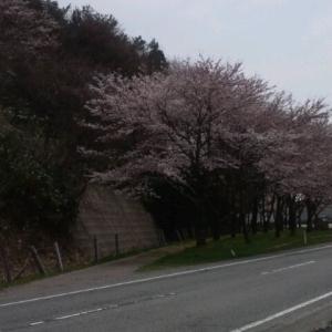 奥能登の春
