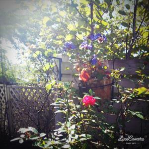 小さな庭のお気に入りゾーン