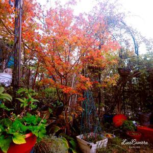 秋が来た感じ満々の小さな庭