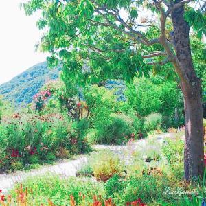 モネの庭で花々を堪能!前編