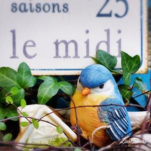 青い小鳥、青い花