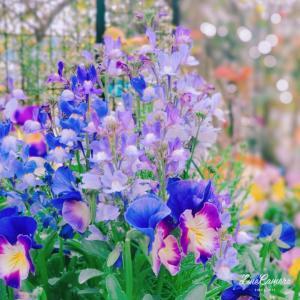 穏やかな庭と相反する世の中