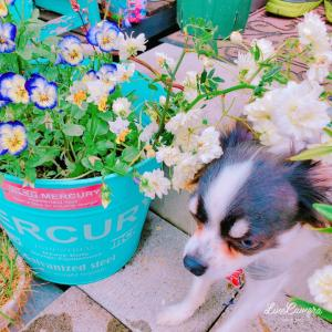 花の写真を撮るはずが…