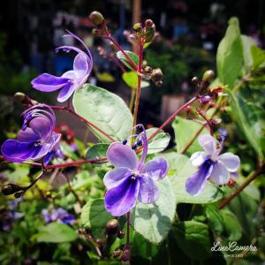 神秘的な青い蝶々が戯れるブルーエルフィン