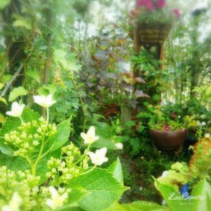 詰め込み過ぎなワンパターンな庭作りから脱出したい!まずはつるバラの基礎を勉強勉強