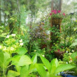 芝生より扱いやすいグランドカバー向けの植物