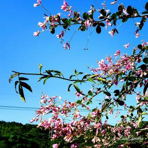 見頃を迎えた初秋の庭の花木たち