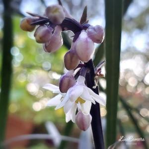 朝日が似合うコクリュウの花と西日待ちのマリーゴールド